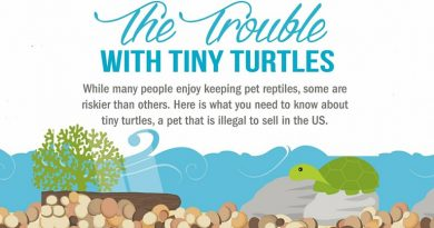 Salmonella Outbreaks Linked to Small Turtles